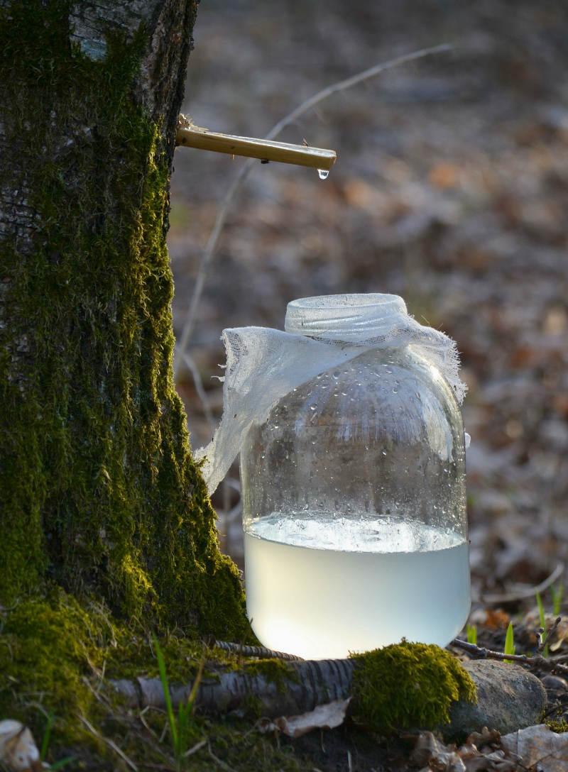 Woda z Brzozy